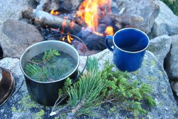 ВЫЖИВАНИЕ: Чай из хвои